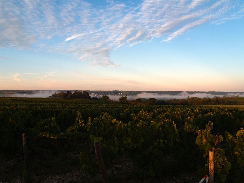 Les Vins Contés – Olivier Lemasson
